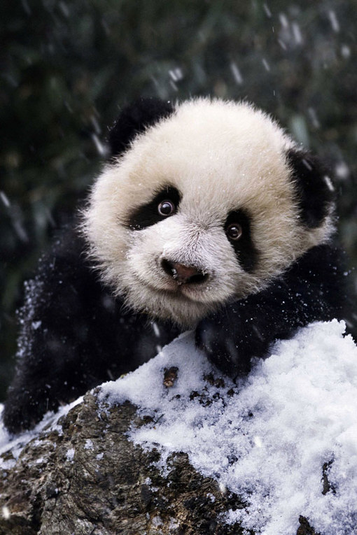 Download 7700 Cari Gambar Binatang Lucu Terupdate