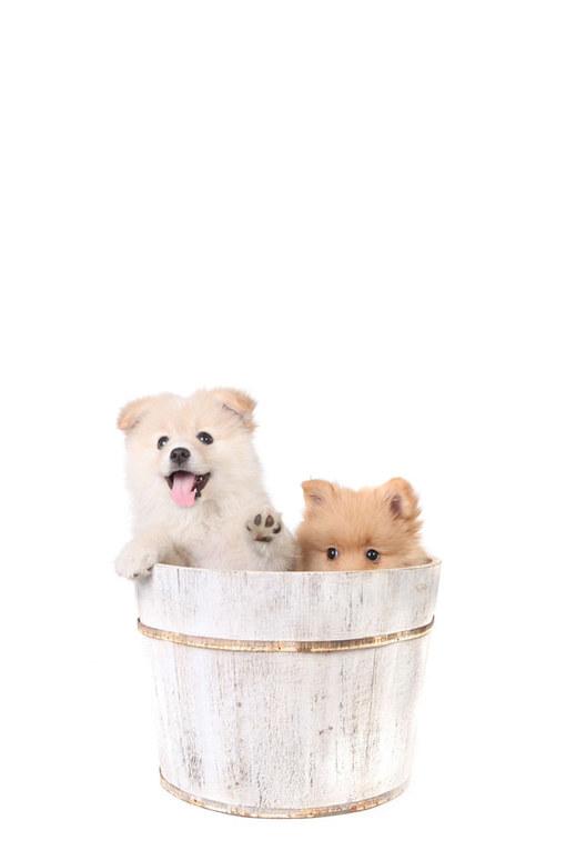 Hewan lucu dan imut - Anjing
