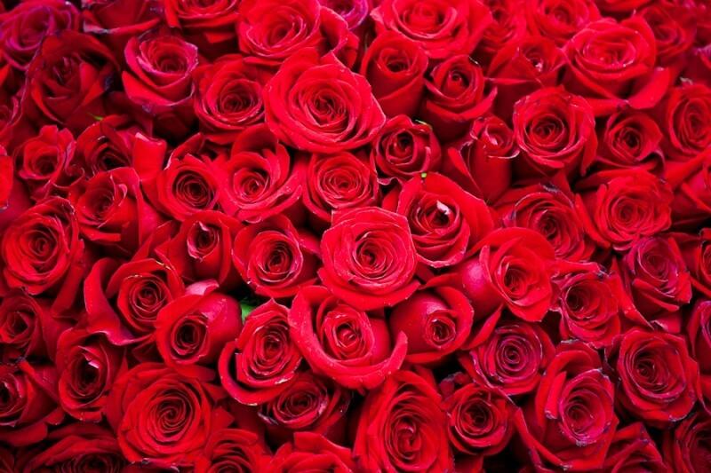 Penanganan bunga mawar