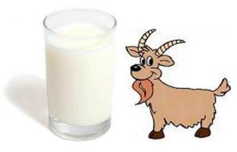 Sejarah Penggunaan Susu Kambing