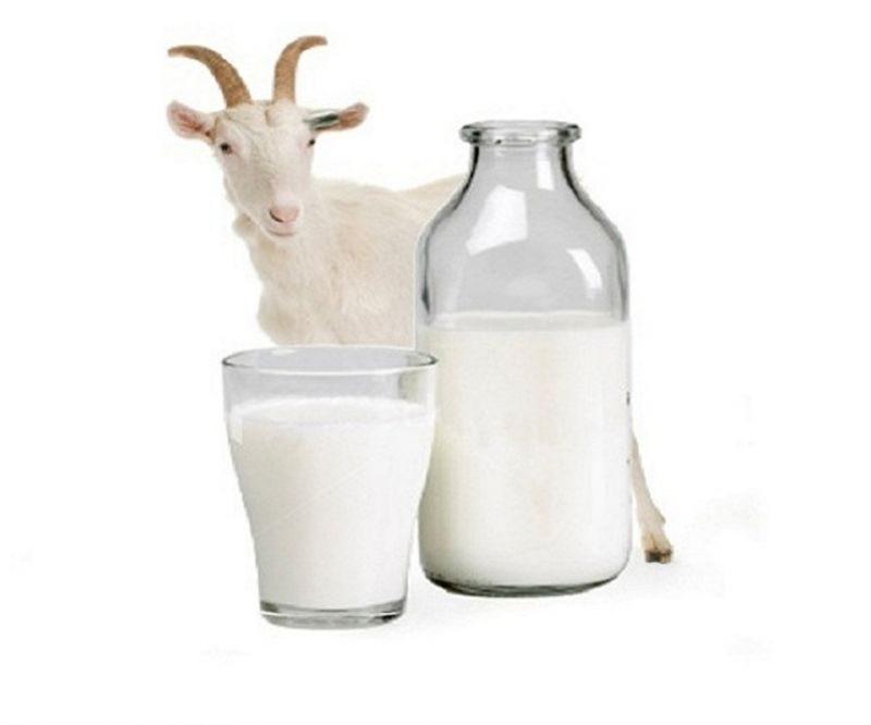 Susu Kambing Cocok Untuk Semua Kalangan Usia