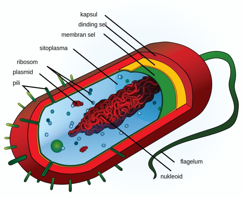 Bagian-bagian Struktur Sel