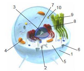 Struktur Sel Manusia dan Hewan