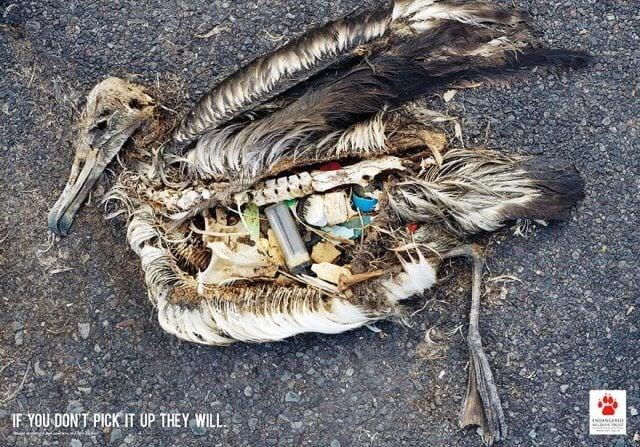 Iklan konservasi lingkungan